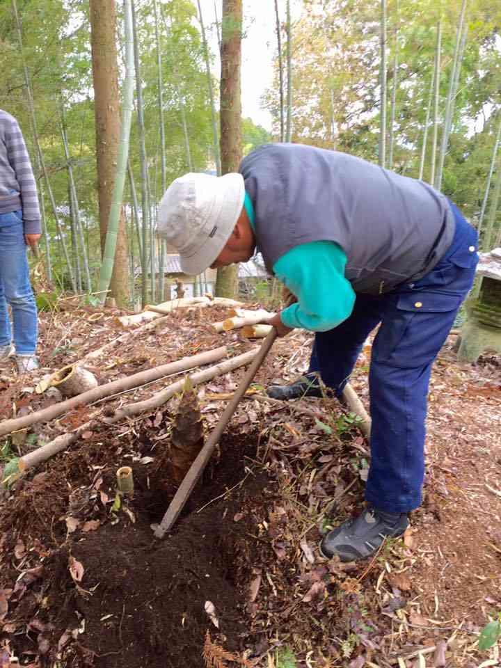 手慣れた鍬さばきでアッという間に一本収穫。孫達が運んでくれます。